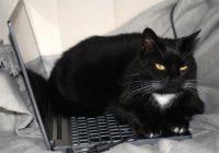 Schwarze Katze, die auf einem Laptop sitzt