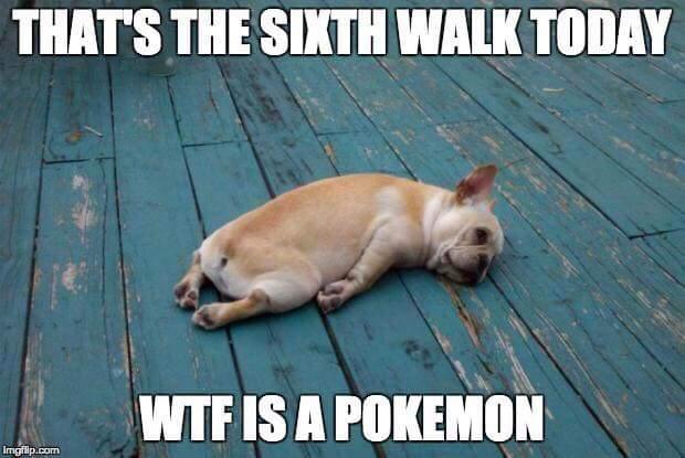 wtf is pokemon