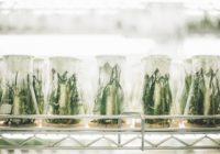 Experiment Pflanzen im Glas