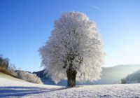 Baum in Winterlandschaft
